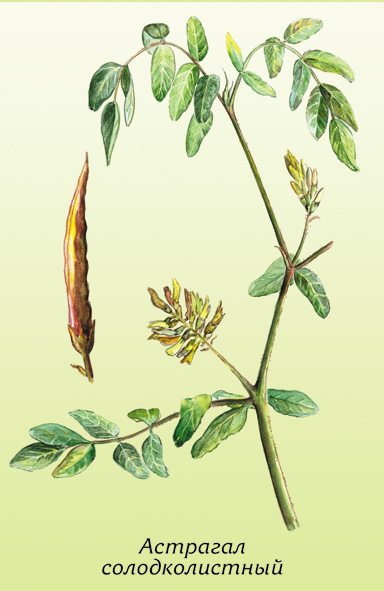 народные средства травы от паразитов
