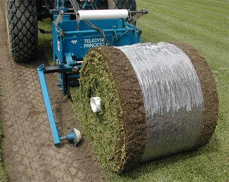 Технология выращивания рулонный газон 13