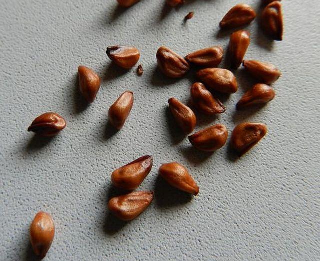 Посадка ирисов: пересадка, выращивание из семян, пошагово